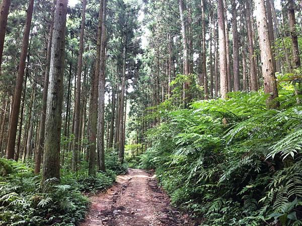 0614山上人家鵝公髻山 (13).JPG