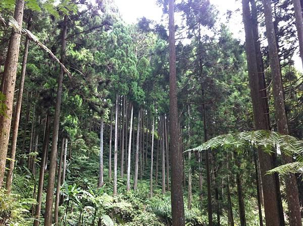 0614山上人家鵝公髻山 (17).JPG