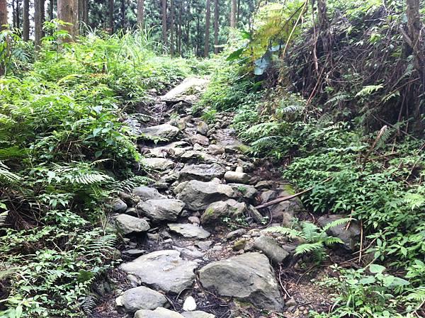 0614山上人家鵝公髻山 (18).JPG