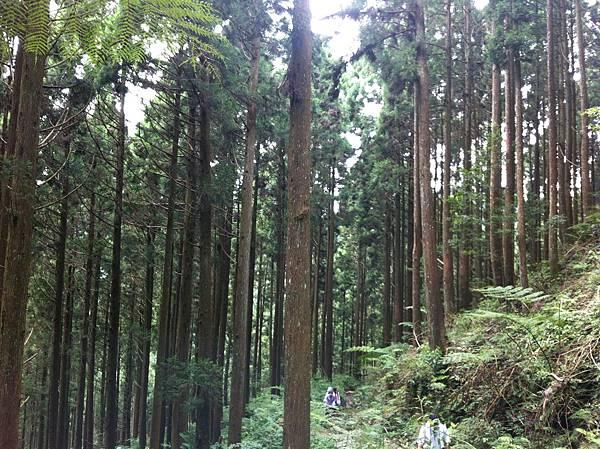 0614山上人家鵝公髻山 (19).JPG