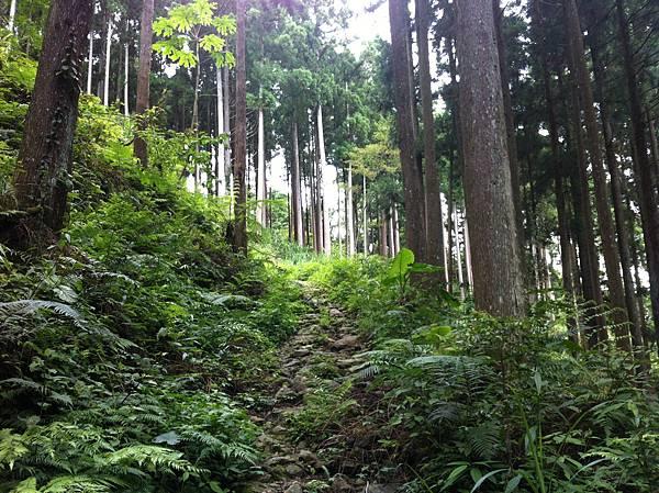 0614山上人家鵝公髻山 (20).JPG