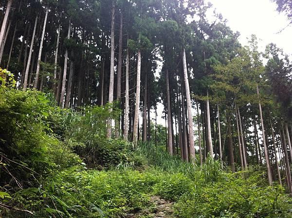 0614山上人家鵝公髻山 (21).JPG