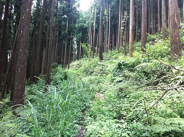 0614山上人家鵝公髻山 (23).JPG