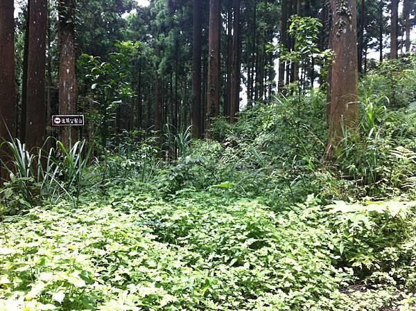 0614山上人家鵝公髻山 (24).JPG