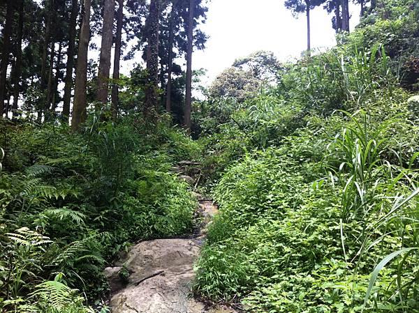 0614山上人家鵝公髻山 (25).JPG