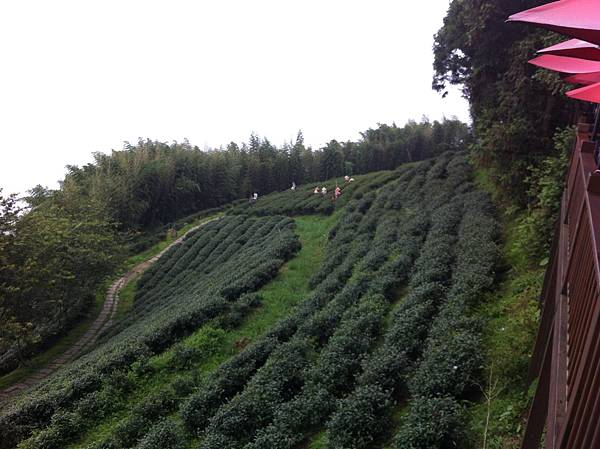0614山上人家鵝公髻山 (41).JPG