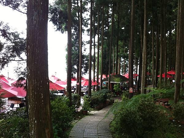 0614山上人家鵝公髻山 (43).JPG