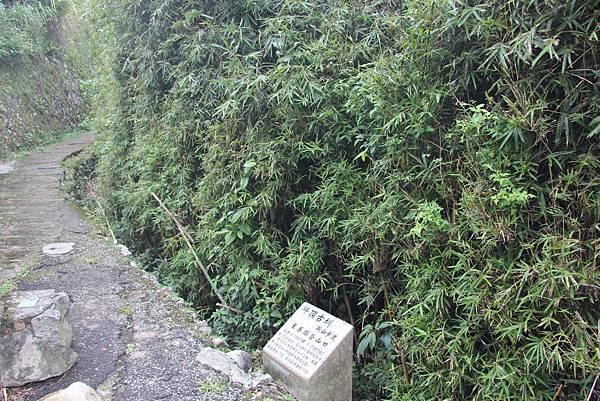 1005坪頂古圳、鵝尾山 (2).JPG