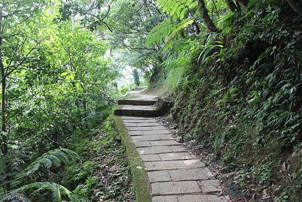 1005坪頂古圳、鵝尾山 (41).JPG