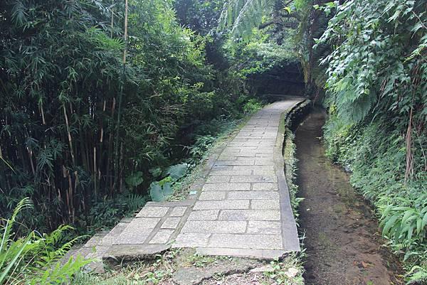 1005坪頂古圳、鵝尾山 (43).JPG