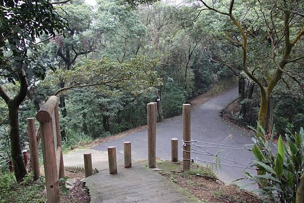 1220鶯歌千年大榕樹 (18).JPG