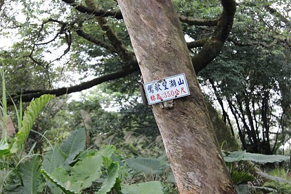 1220鶯歌千年大榕樹 (51).JPG