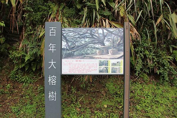 1220鶯歌千年大榕樹 (55).JPG