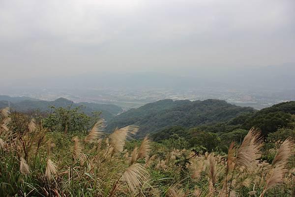 1220鶯歌千年大榕樹 (56).JPG