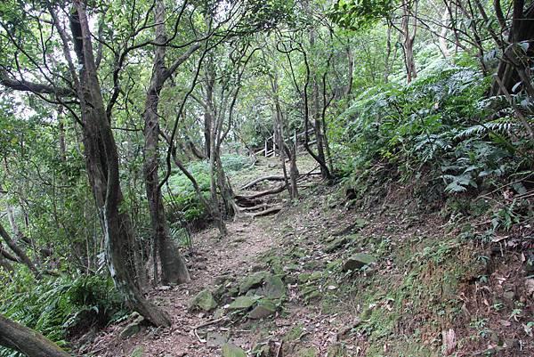 0101小粗坑古道小粗坑山 (42).JPG