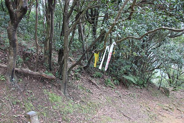 0101小粗坑古道小粗坑山 (44).JPG