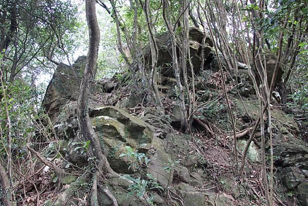 0101小粗坑古道小粗坑山 (45).JPG
