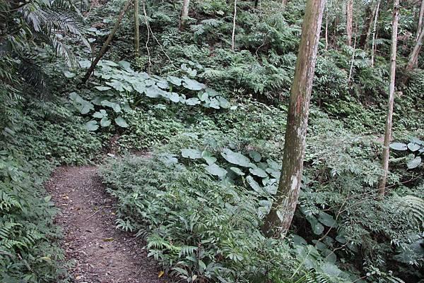 0207三峽雲森瀑布 (13).JPG