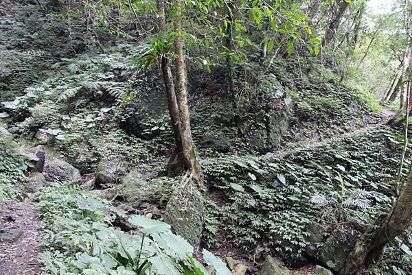 0207三峽雲森瀑布 (16).JPG