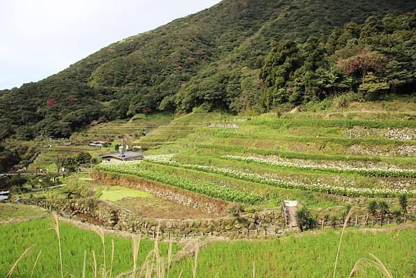 0308竹仔湖上中正山 (5).JPG