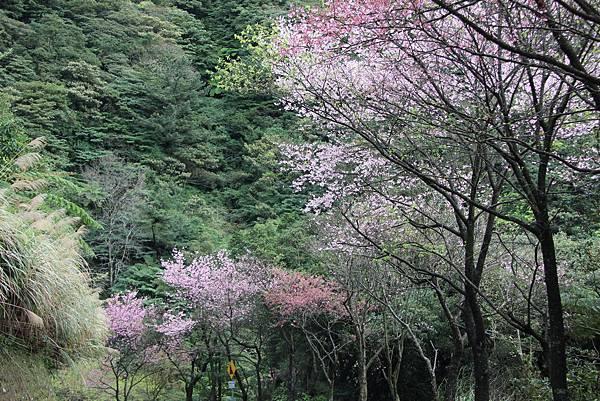 0308竹仔湖上中正山 (27).JPG