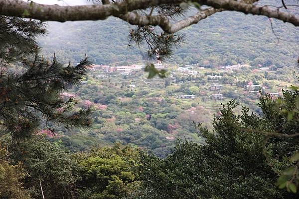 0308竹仔湖上中正山 (34).JPG
