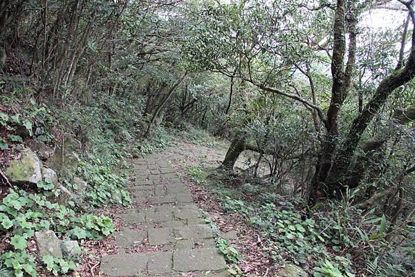 0308竹仔湖上中正山 (41).JPG