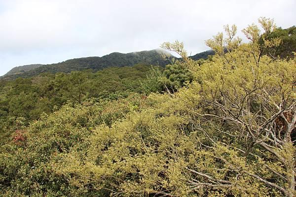 0308竹仔湖上中正山 (61).JPG