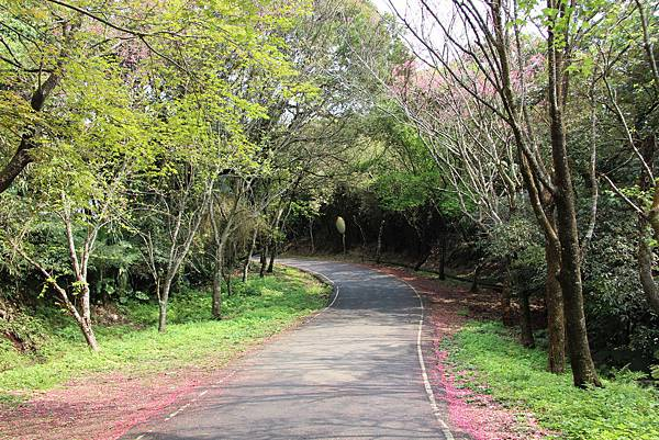 0308竹仔湖上中正山 (71).JPG