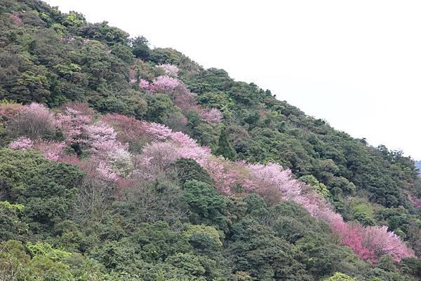 0308竹仔湖上中正山 (79).JPG
