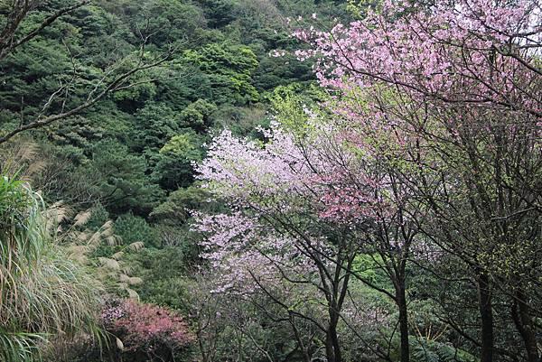 0308竹仔湖上中正山 (81).JPG