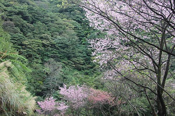 0308竹仔湖上中正山 (82).JPG