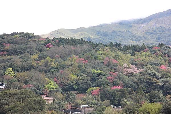 0308竹仔湖上中正山 (86).JPG