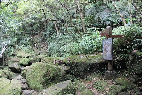 0627東勢格古道上臭頭山 (25).JPG