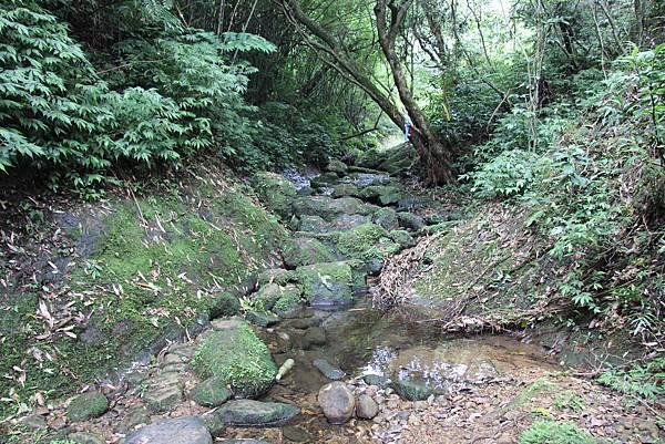 0627東勢格古道上臭頭山 (27).JPG