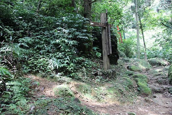 0627東勢格古道上臭頭山 (30).JPG