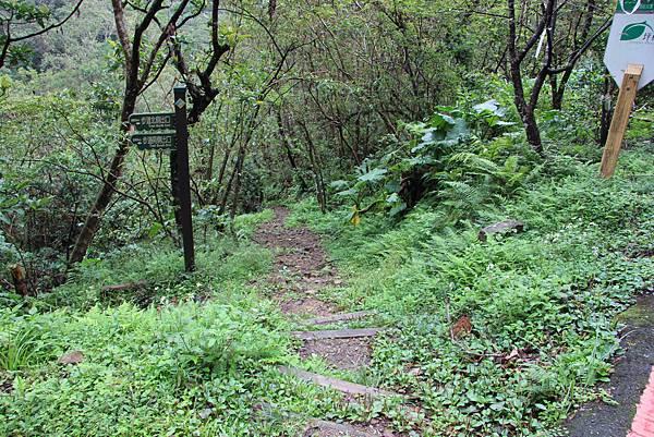 1025金瓜寮溪步道 (7).JPG