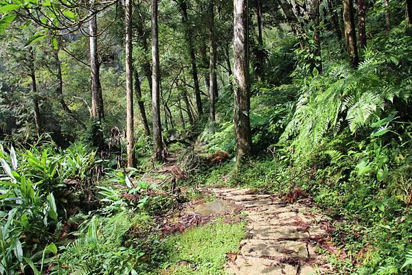 1025金瓜寮溪步道 (56).JPG