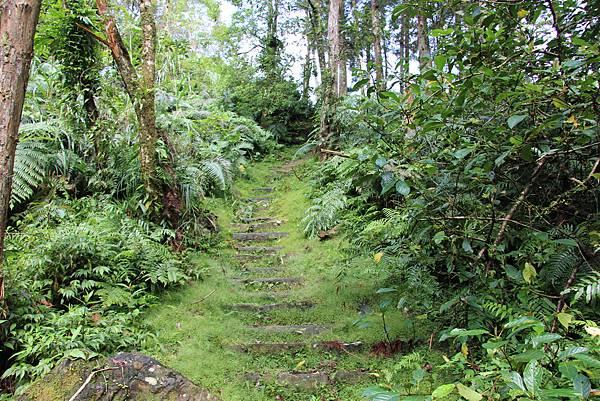 1025金瓜寮溪步道 (60).JPG