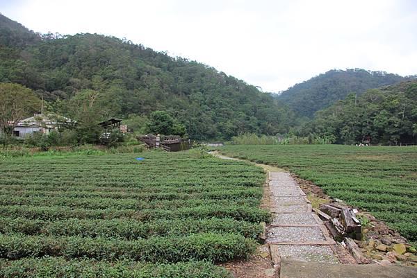 1025金瓜寮溪步道 (94).JPG