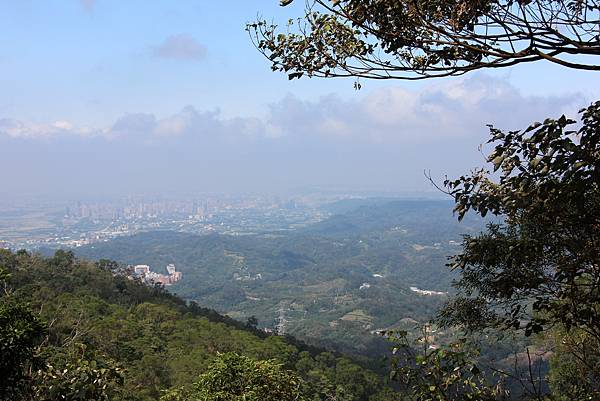 1031芎林飛鳳山、新埔文山國小百年香楓 (52).JPG