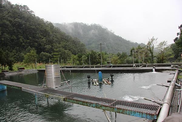 1101雪山泉養殖場 (6).JPG