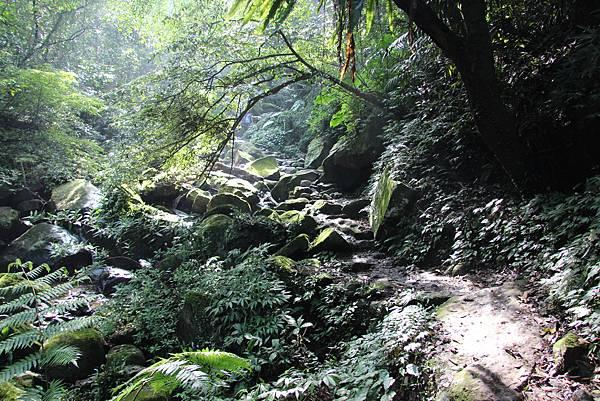1107遊三芝青山瀑布尖山湖步道 (40).JPG