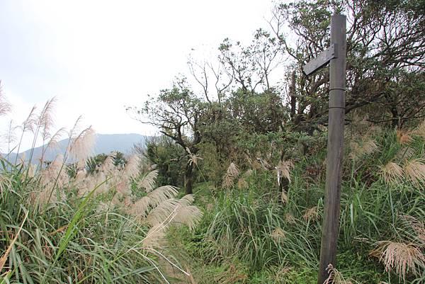 1107遊三芝青山瀑布尖山湖步道 (84).JPG
