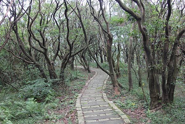 1107遊三芝青山瀑布尖山湖步道 (87).JPG