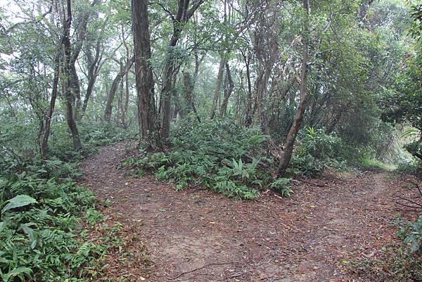 1226大芁芎古道上溪州山  (43).JPG