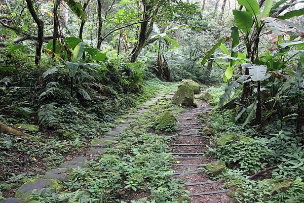 1226大芁芎古道上溪州山  (59).JPG