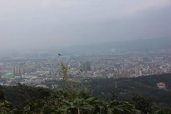 0220林大同山、青龍嶺、大棟山 (10).JPG