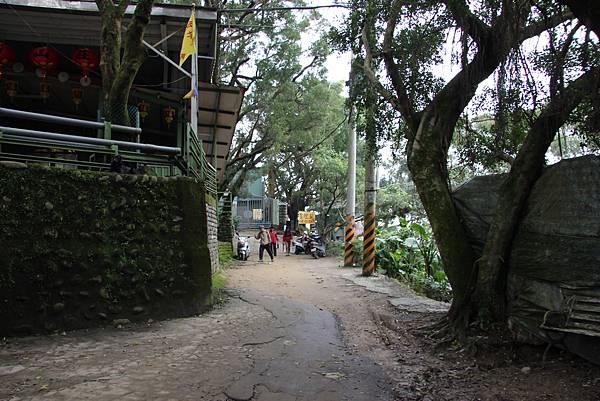 0220林大同山、青龍嶺、大棟山 (37).JPG