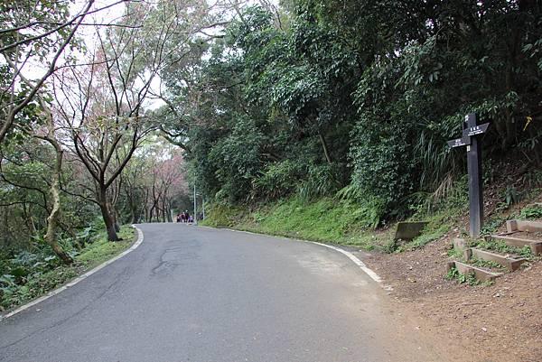 0220林大同山、青龍嶺、大棟山 (39).JPG